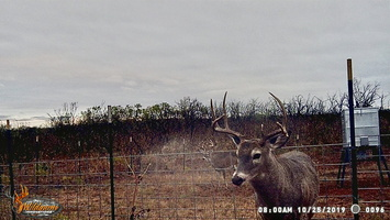 2019 Oct Game Cam Pics